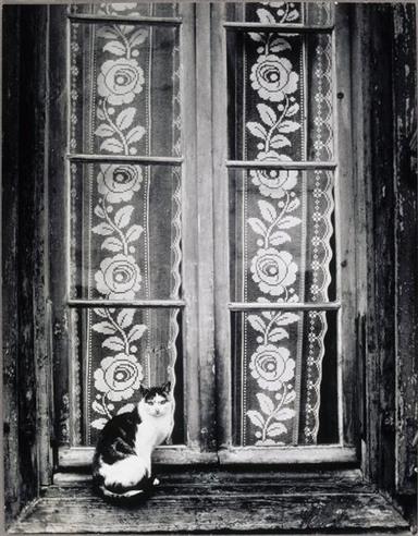 01- Des chats à la fenêtre