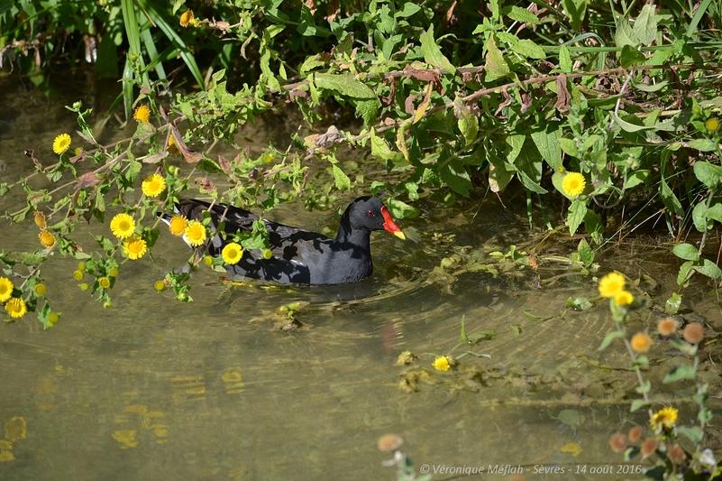 Sèvres : L'Île de Monsieur : Un parc écolo-nautique entre Seine et terre