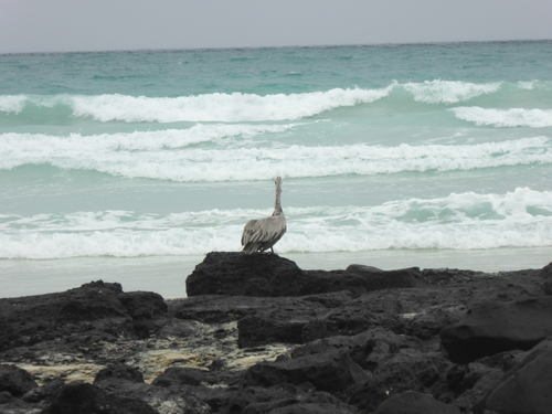Balade à Santa Cruz / Tortuga Bay