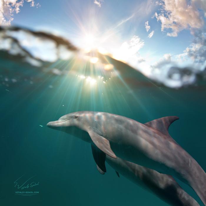 Danses sous-marines: de magnifiques photos sous-marines de Vitaly Sokol