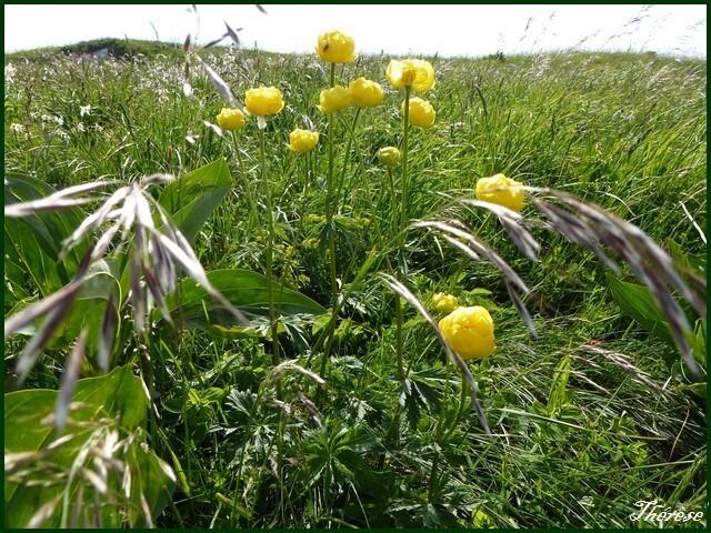 Flore du Grand Colombier (17)