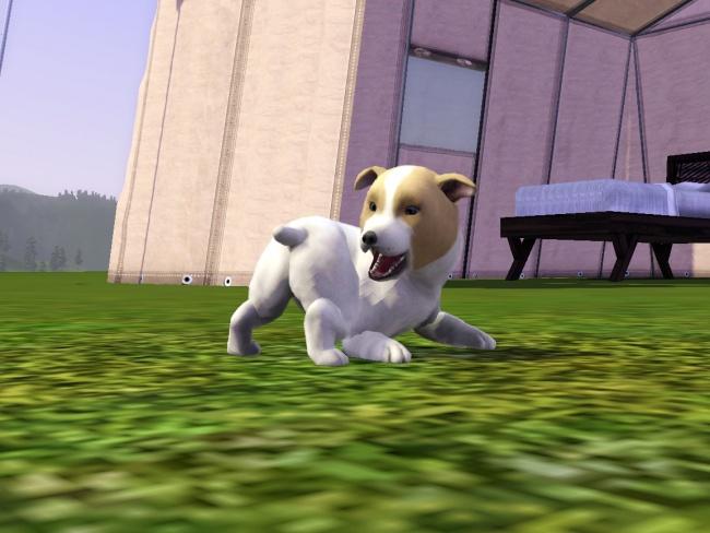 Chapitre 2 suite : Une chien et un petit ami !