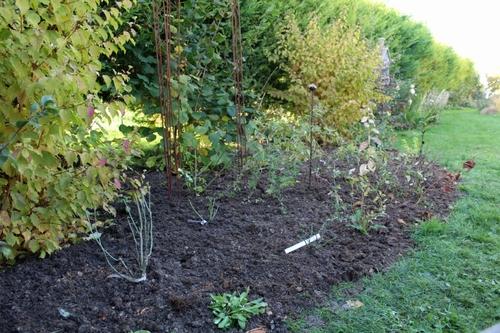 Nouveau massif et nouvelle plantation de rosiers