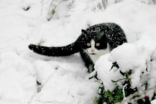 neige (3)