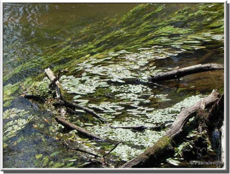 Balade nature au bord de la Leyre à Mios
