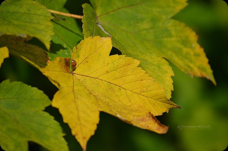 L'automne à Rambouillet