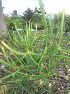 jardin-barriere-tival-033.JPG