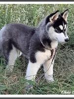 Pouchka (3 mois)