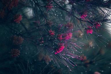 La magie des plantes ...