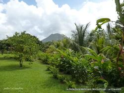 Martinique-ballade à terre