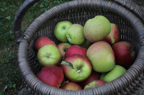 2018 une année à pommes