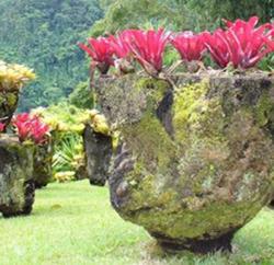 Découvrir l'île de la Martinique