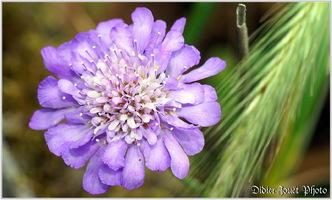 Fleurs & Plantes
