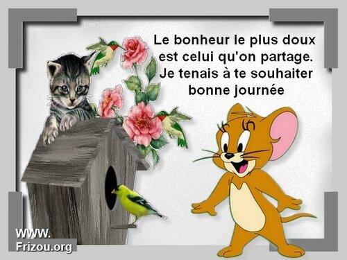 L'Ile aux chats !!!