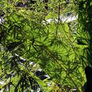 Jeu d'ombres et de lumière (Feuilles de bambou et feuilles de bananier) - Photo : Yvon