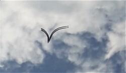 Oiseau danse