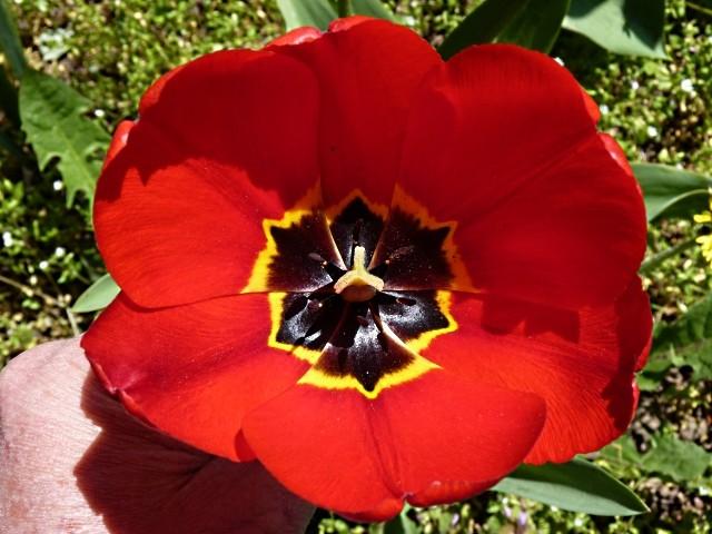 Metz fleurs d'été 6 mp1357 2011