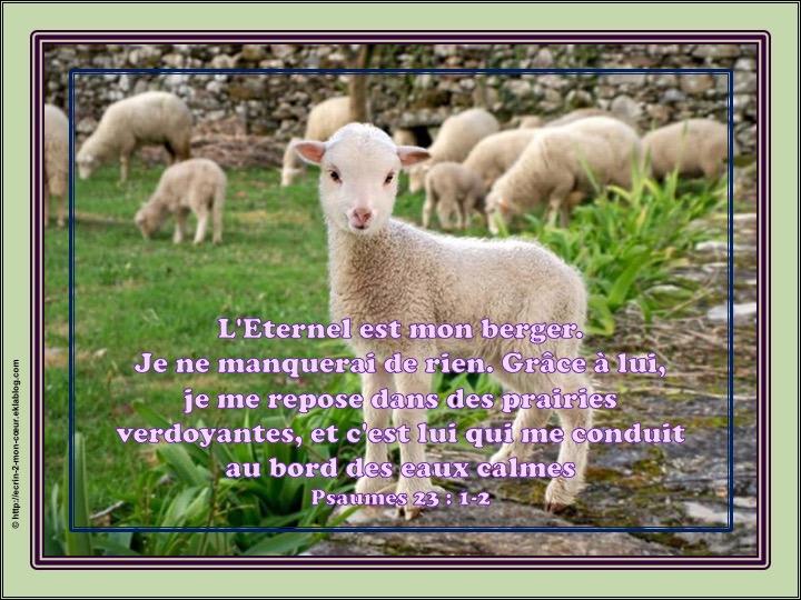 L'Eternel est mon berger, je ne manquerai de rien - Psaumes 23 : 1-2