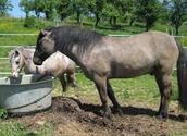 Différentes catégories de chevaux....