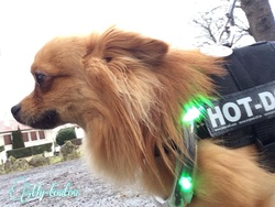 Test collier Lumidog