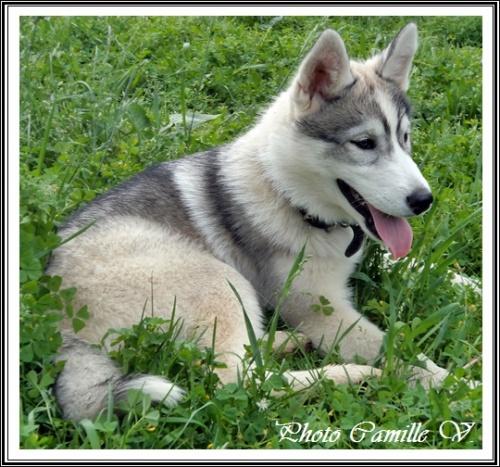 Hindy (4 mois)