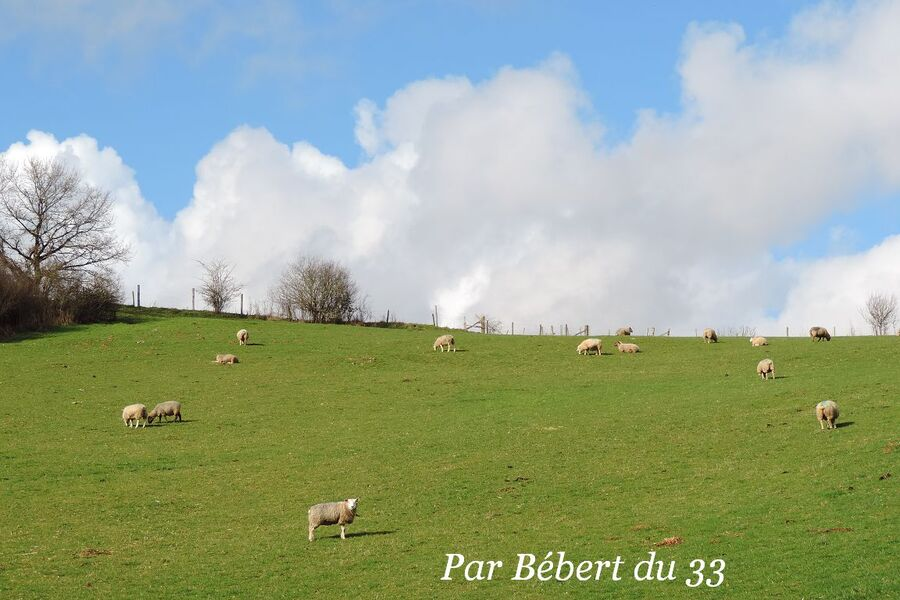Solignac dept 87(2) l'abbatiale