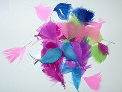 Paon aux plumes colorées