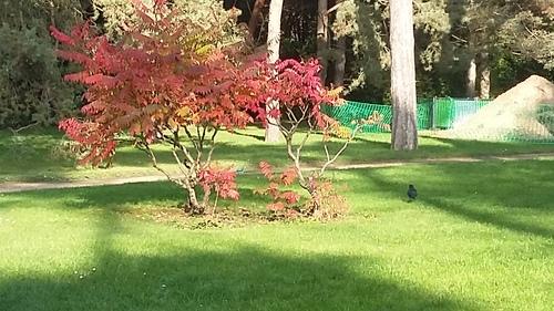 balade au parc floral
