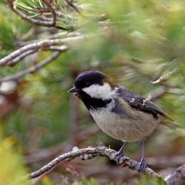 A l'écoute des chants d'oiseaux