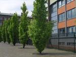 Lycée devant