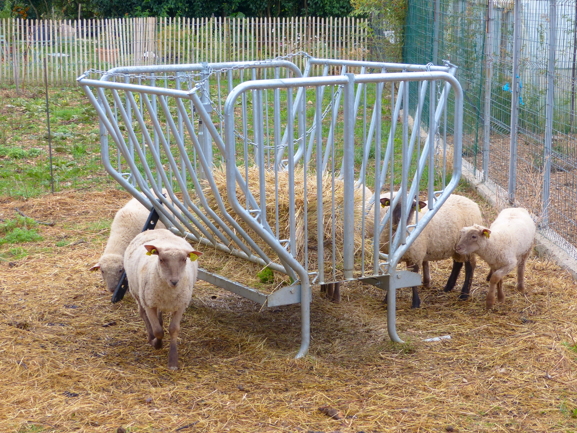 http://ekladata.com/LbrXGC4FsnivihttUBOFnJeZhFU/Saint-Jurs-2016-moutons.jpg