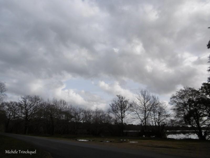 Une balade à l'Etang Blanc, le 12 février (suite)...
