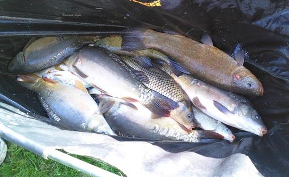 Pêche au coup à l'étang de Sassay -Carpes et Tanches