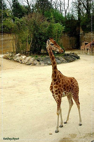 Zoo-Douai 0936