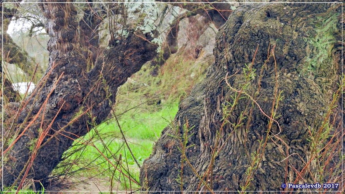 Balade à Gujan-Mestras en Mars 2017 - 9/12