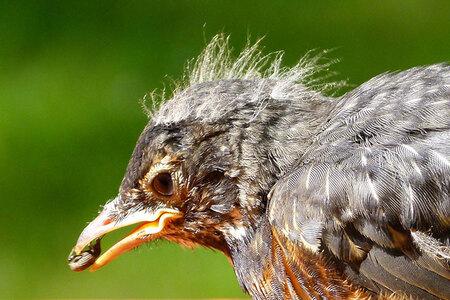 Pourquoi la disparition des oiseaux est un véritable désastre ?