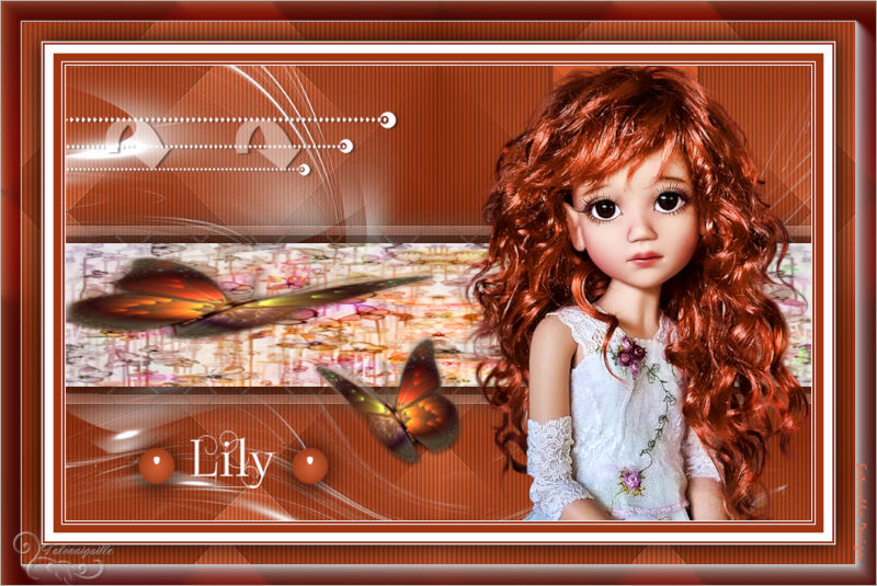 *** Lily ***