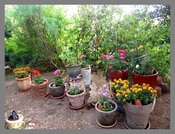 Le Jardin du Maquis vs le Jardin de Claude Monet