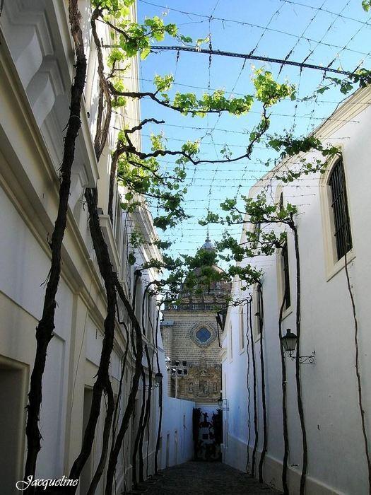 Espagne_Andalousie_Cathedrale-de-San-Salvador-Jerez