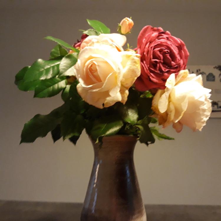 Les fleurs du jardin...