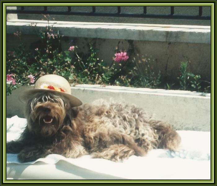 Mougui  mon premier chien