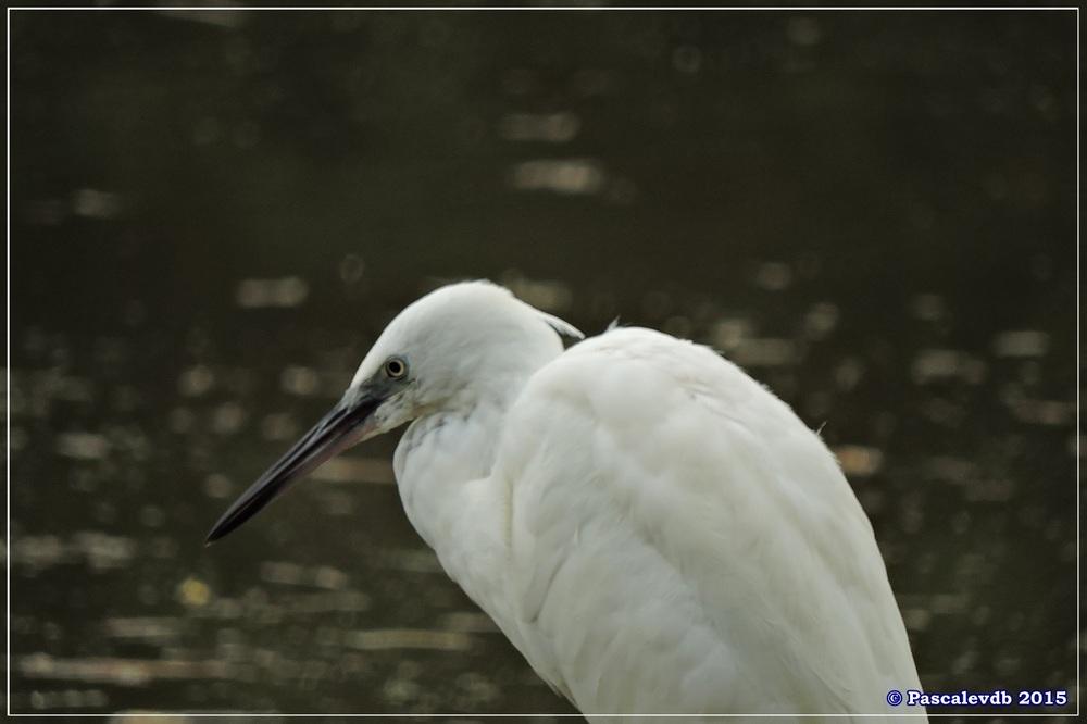 Réserve ornitho du Teich - Septembre 2015 - 2/6