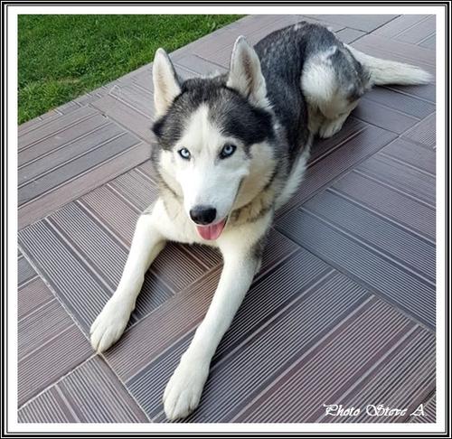 Ilouky (6 ans)