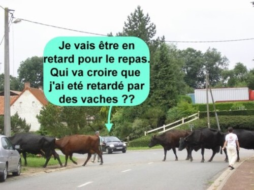 attention passage de vaches
