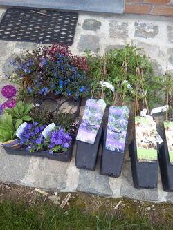 4 mars 2016 un peu de fleurs pour changer