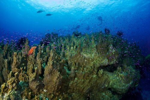 recif-corail-hienghene