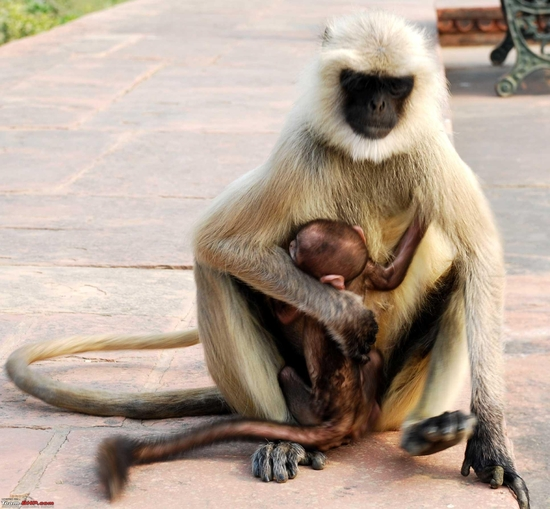 mother-&-child