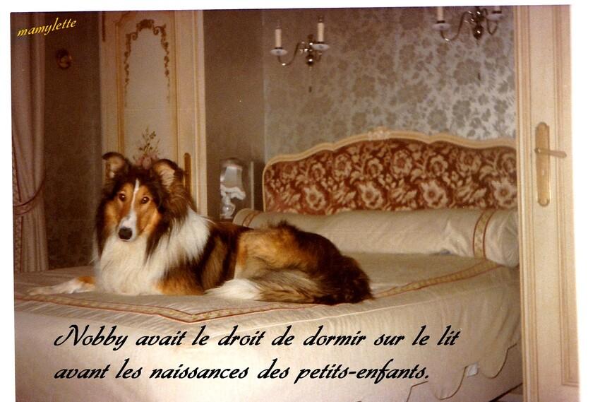 Une bonne vie de chien