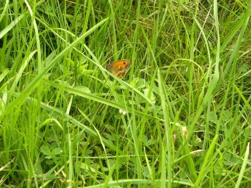 Beaux papillons