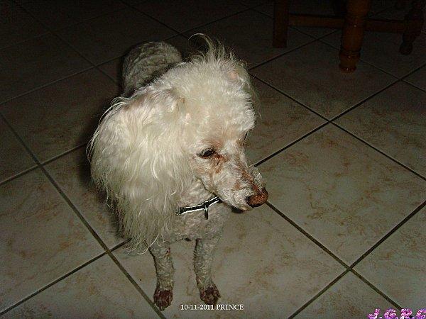 46-chien--10.11.11-ESO.JPG
